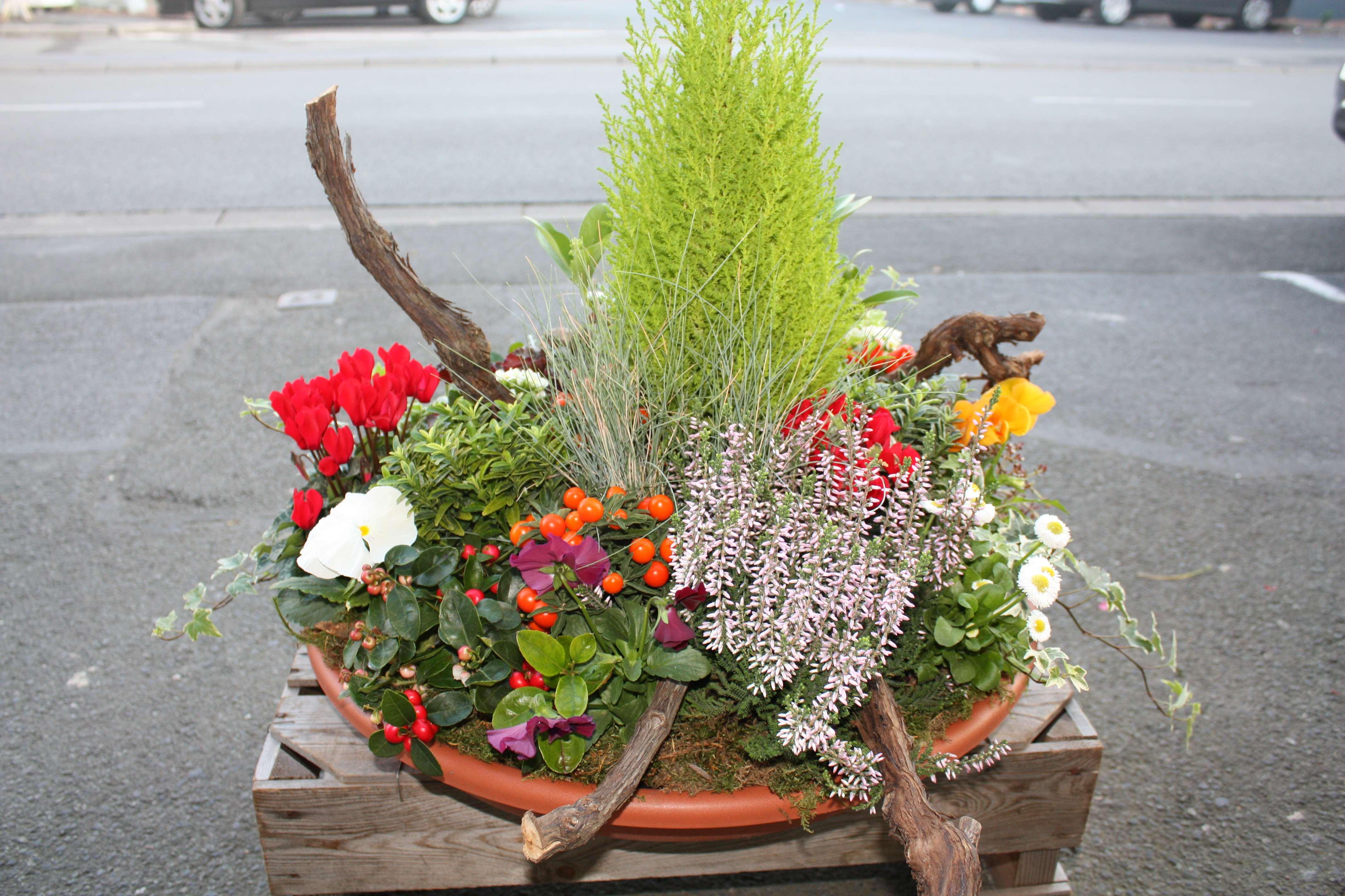 Les floralies d 39 anchin plantes ext rieur for Plantes d exterieur