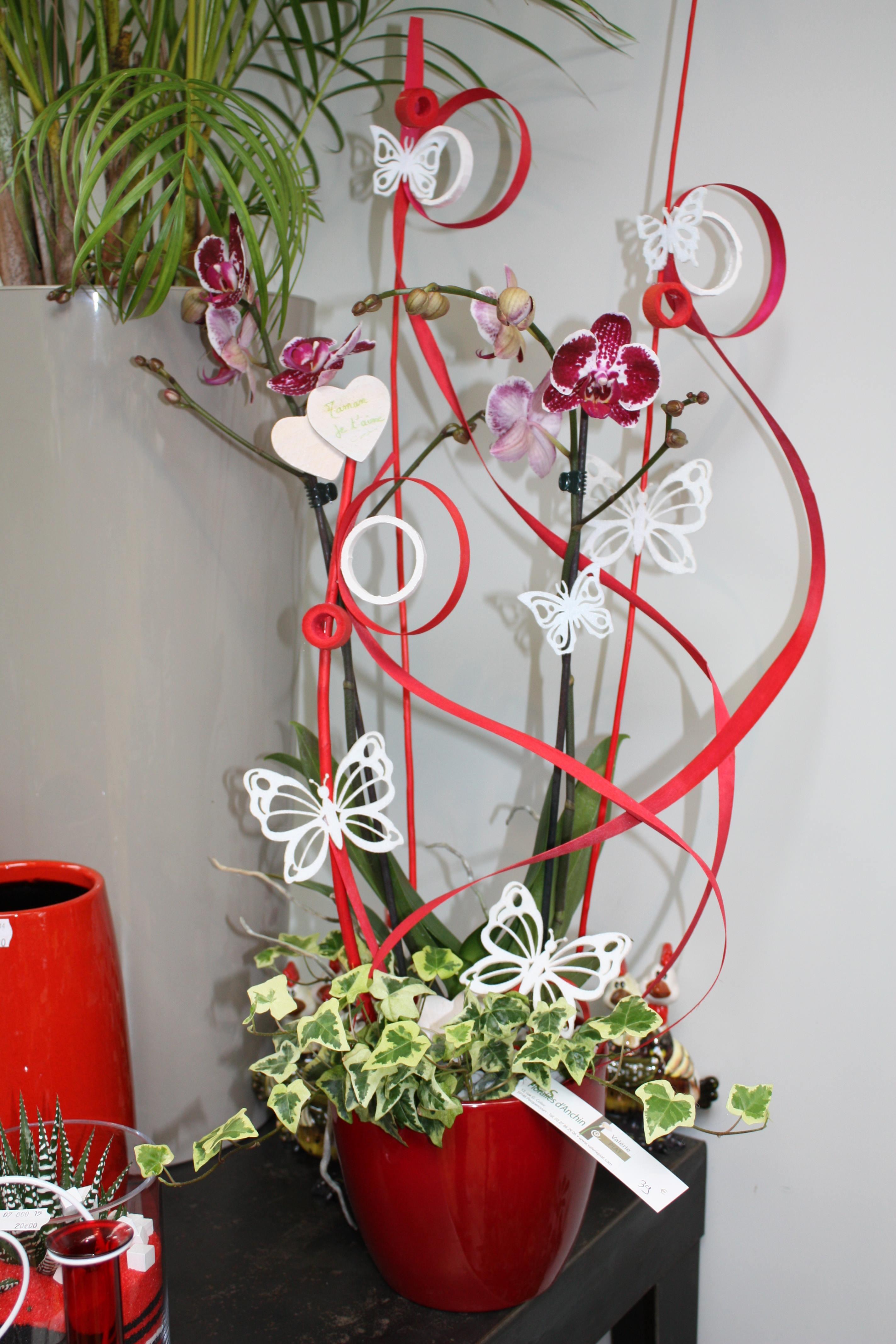 Les floralies d 39 anchin plantes d int rieur - Les plantes d interieur ...