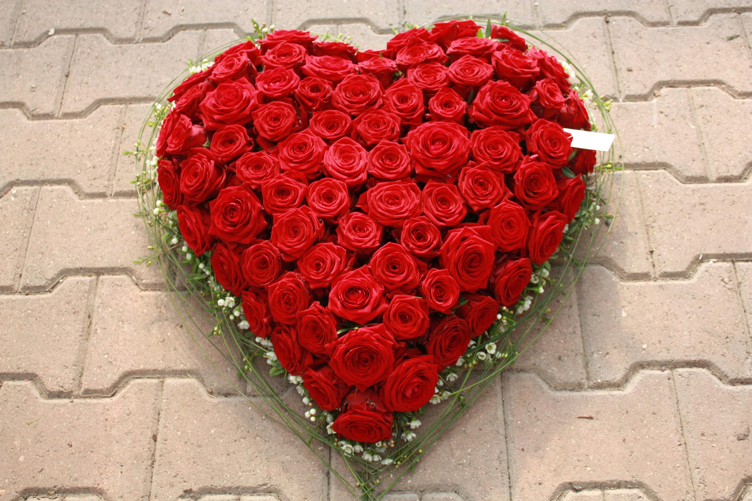 Cœur  roses rouge