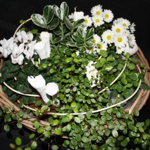 Plantes extérieurs