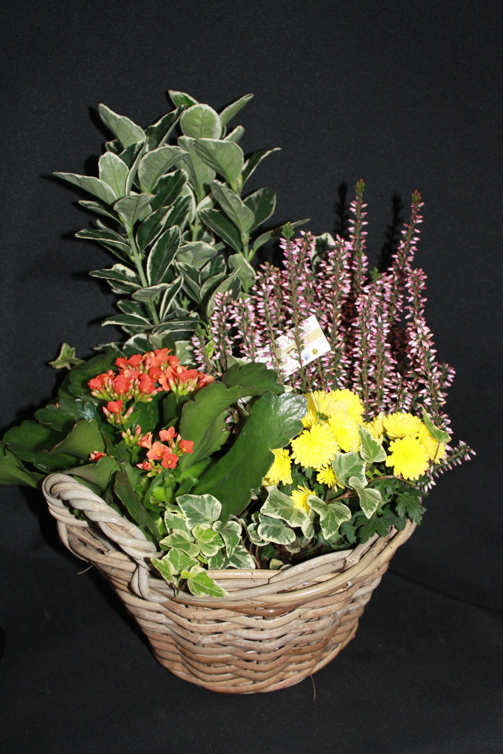 Coupe de 5 plantes extérieur