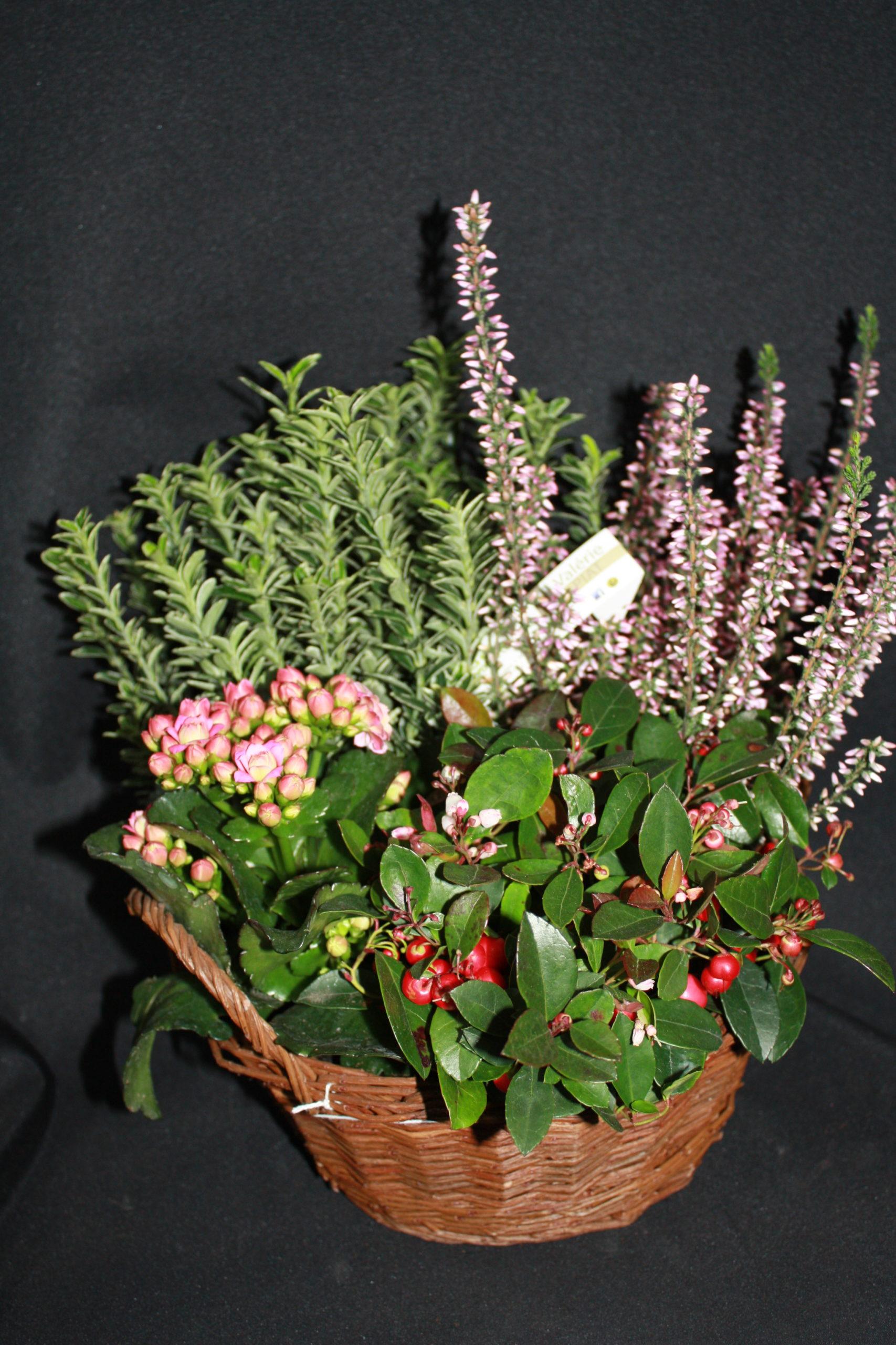 Coupe de 4 plantes extérieur