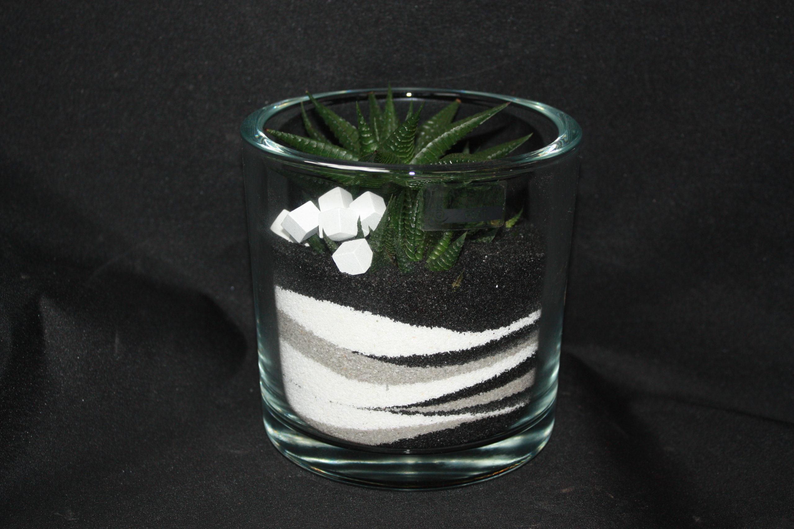 Aloes dans vase de sable Noir