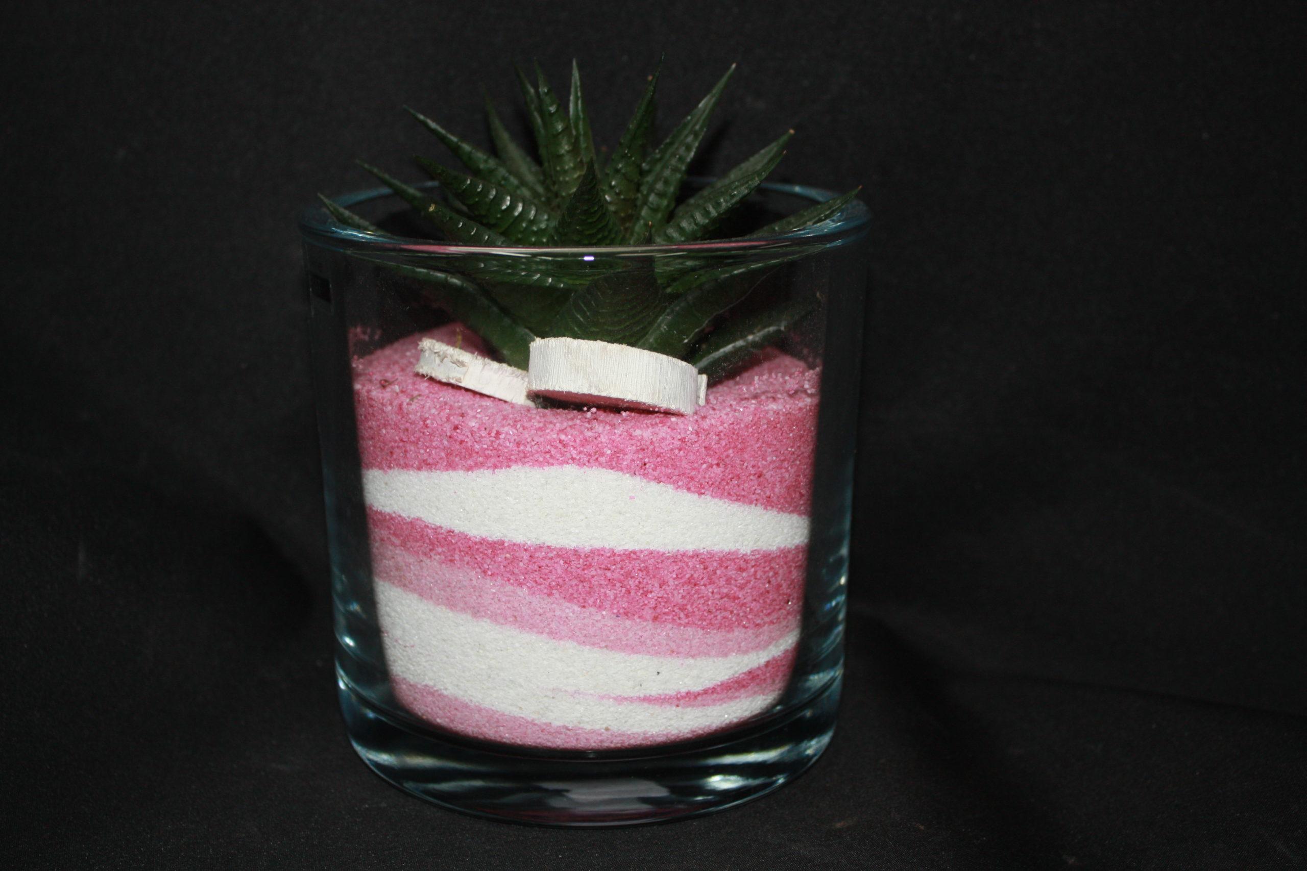 Aloes dans vase de sable Rose