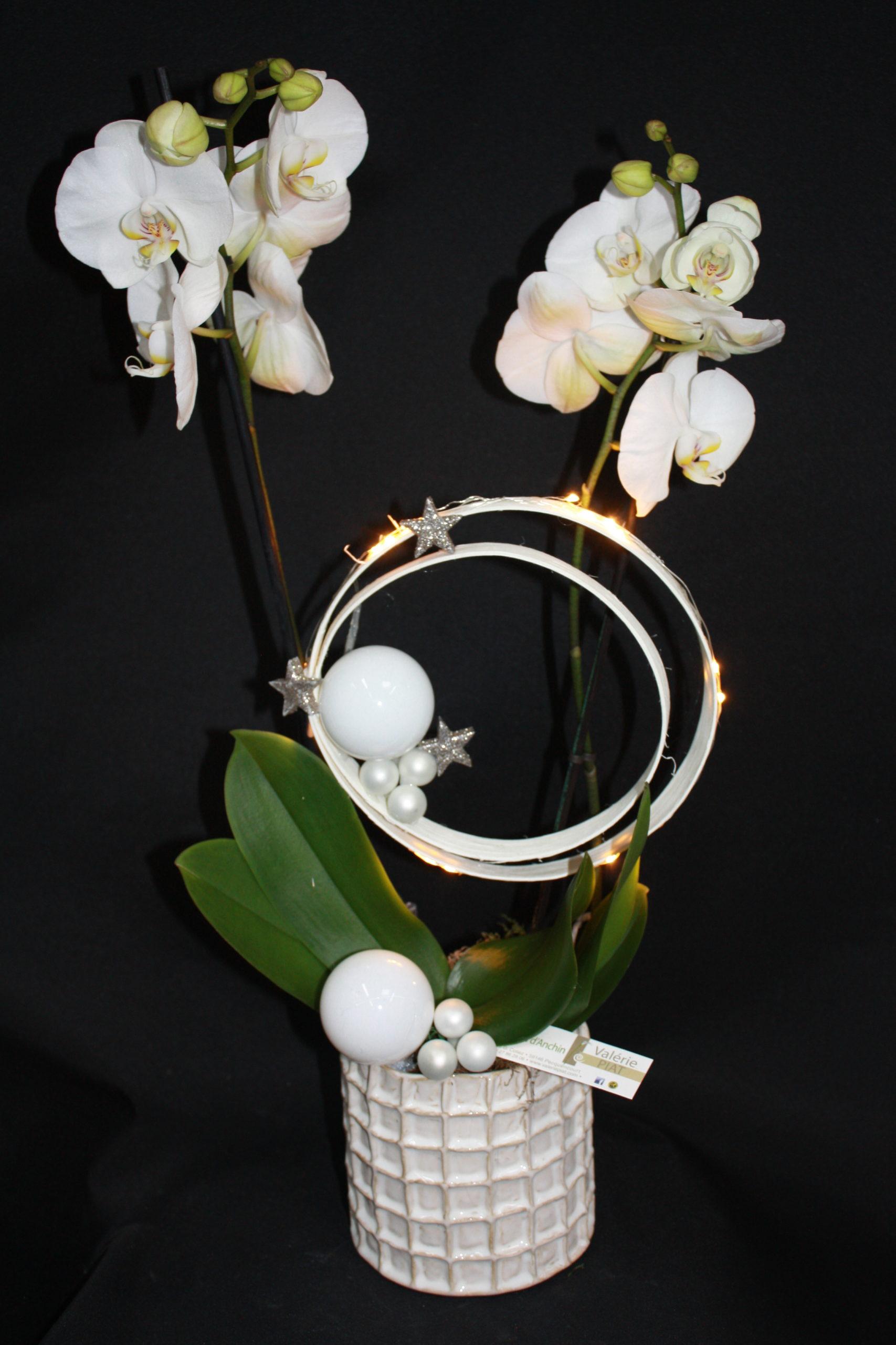 Orchidée blanche Noël