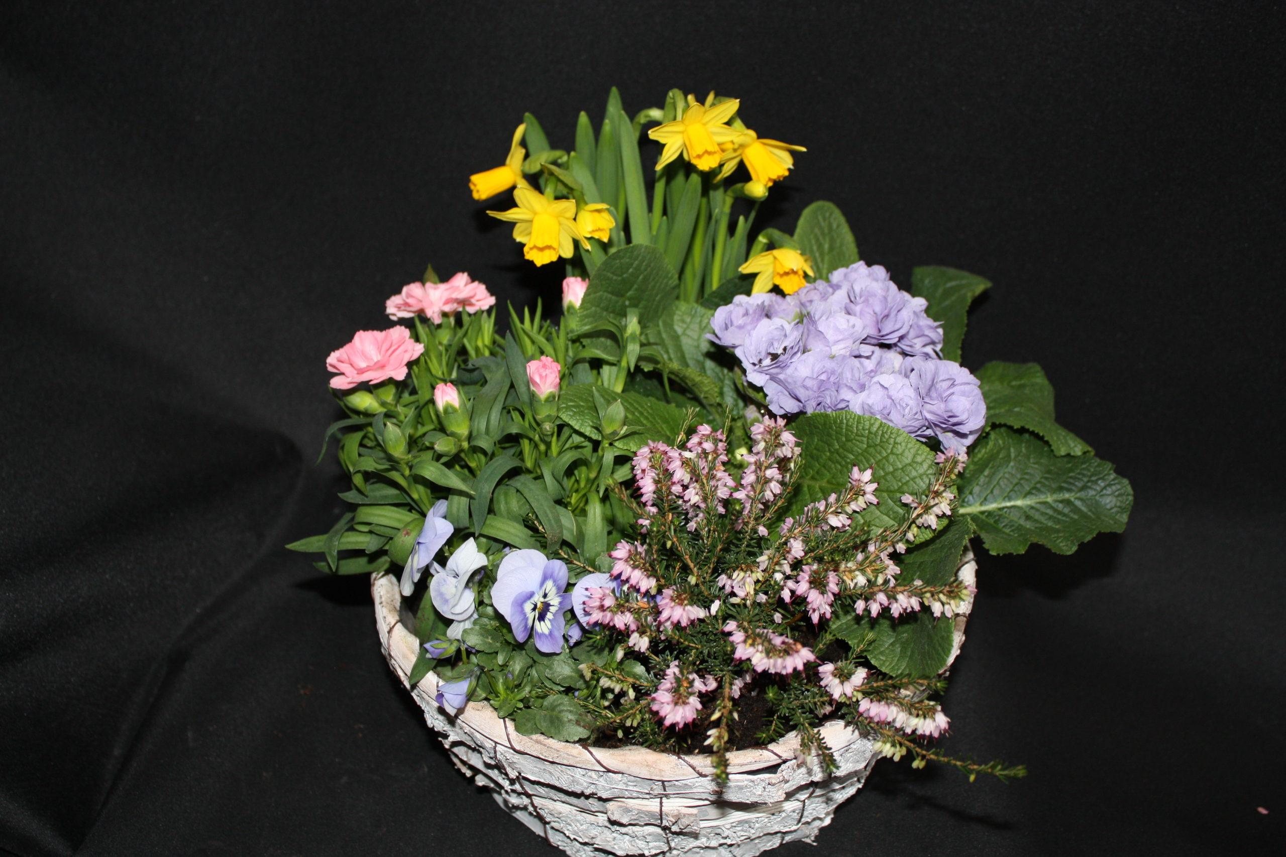 Coupe de 4/5 plantes extérieur